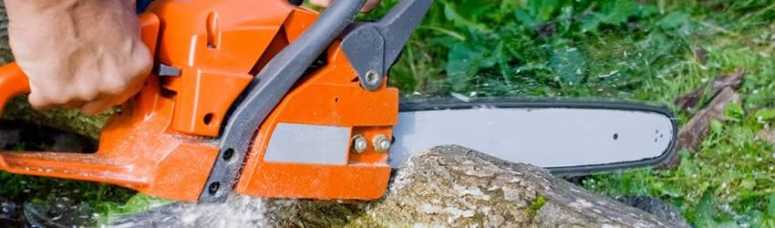 Arborist cutting tree trunk with chainsaw